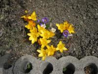 H21 4 庭の花 002.jpg