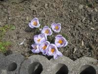 H21 4 庭の花 003.jpg