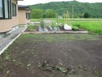 H21 6/16 ニセアカシア  003.jpg